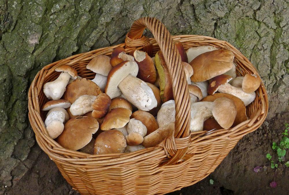 z dne�n�ho jizerskohorsk�ho houba�en�