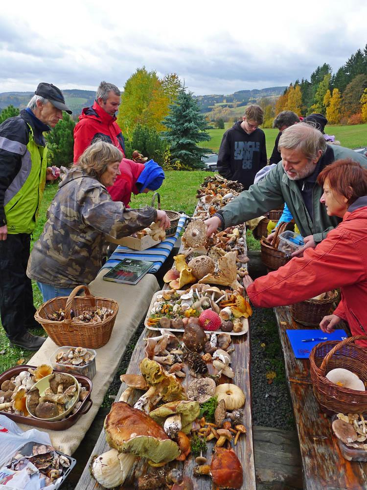 příprava terénní výstavky hub