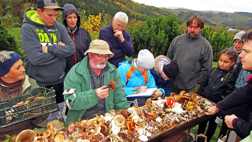 z diskuze knalezeným houbám