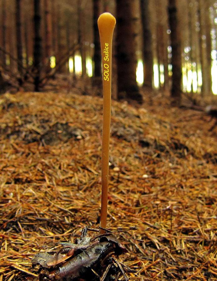 kyj rourkovitý – Macrotyphula fistulosa, Bradlo - foto: Petr Hampl