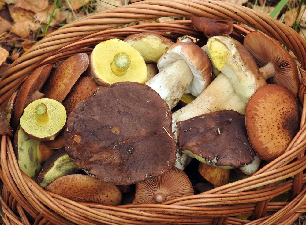 podzimní houbařova radost - foto: František Šváb