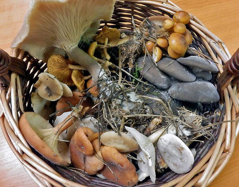směs podzimních druhů hub