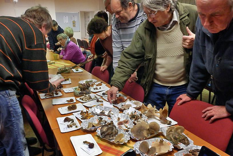 provizorní výstavka donesených hub