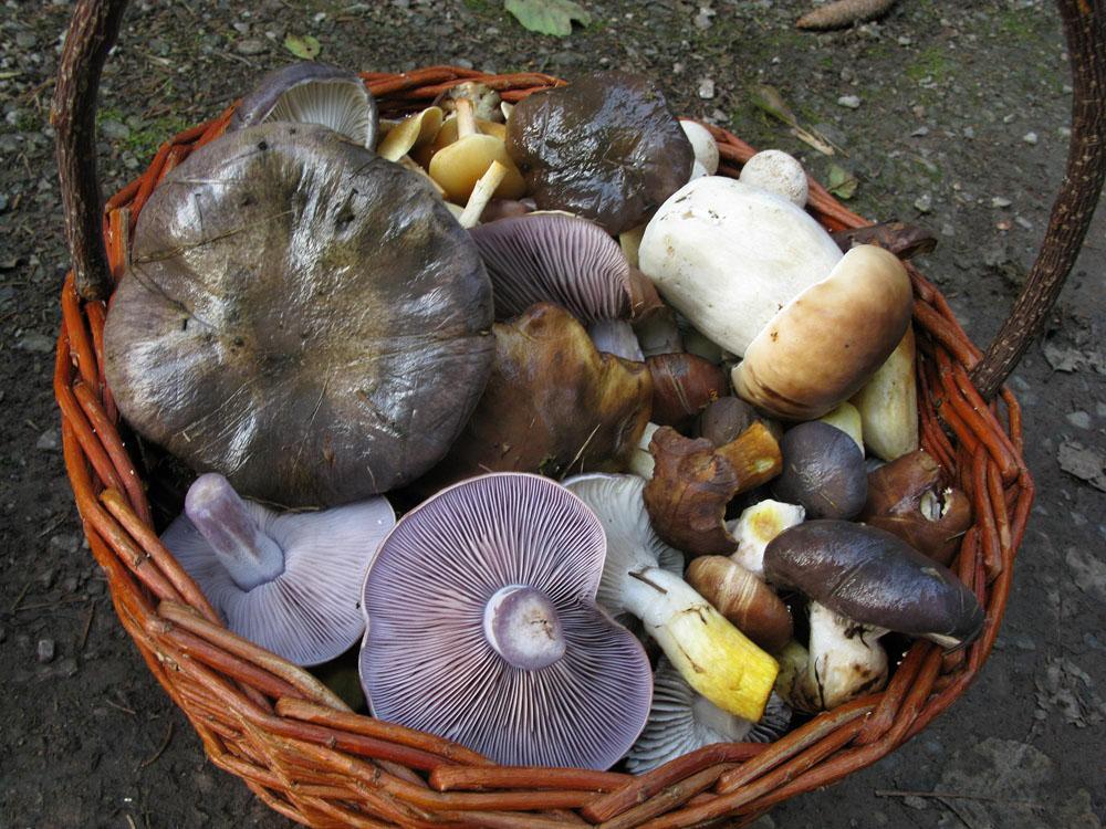koš ještě podzimních hub - foto: Jiří Laštůvka