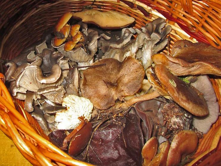 ukázka nalezených druhl hub