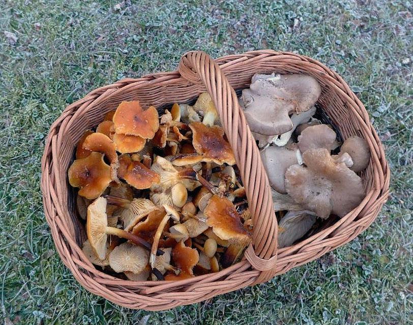 houbaření za mrazu - foto: Petr Souček