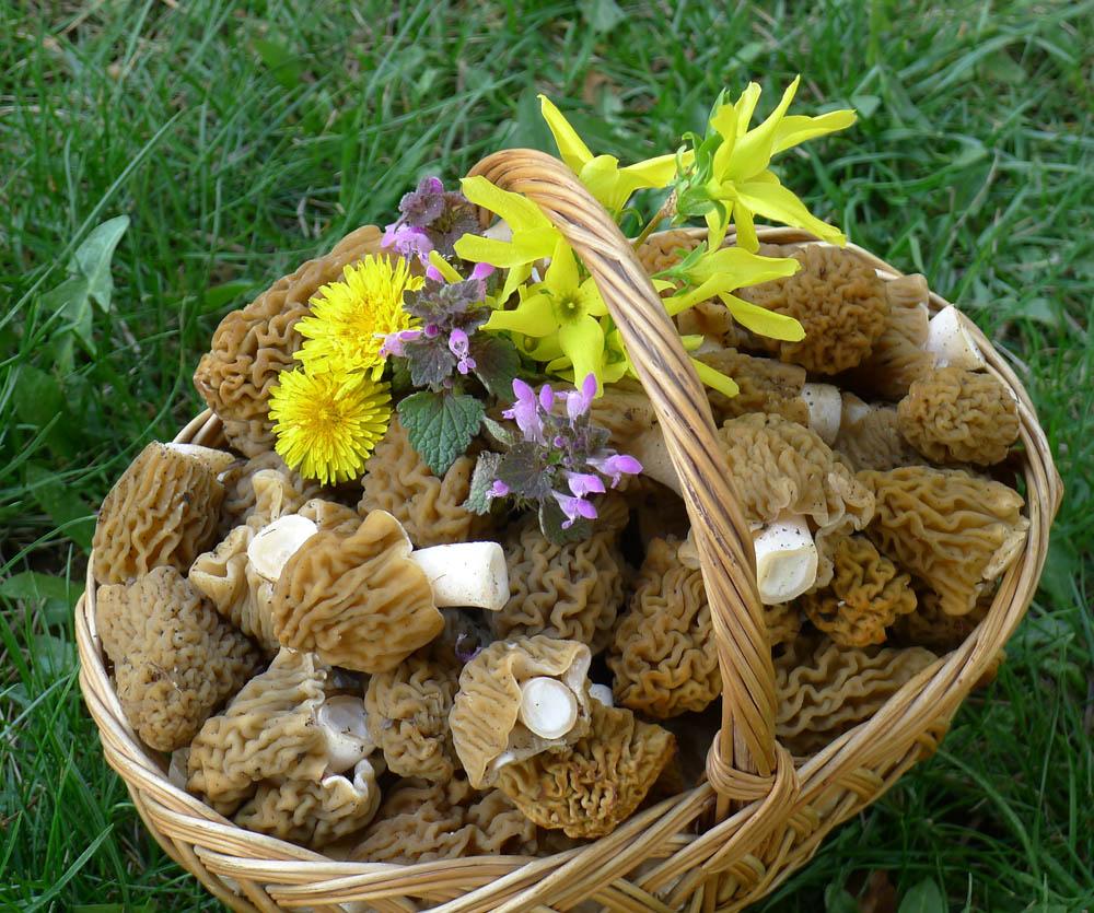 z předvelikonočního houbaření - foto: A. Vít
