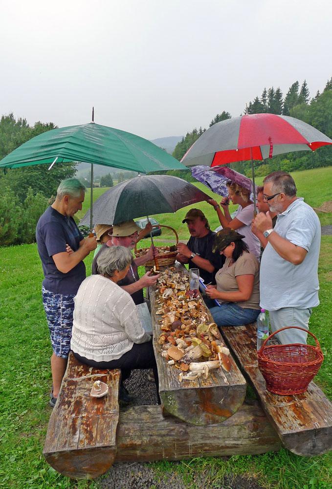to nám prší houbičky