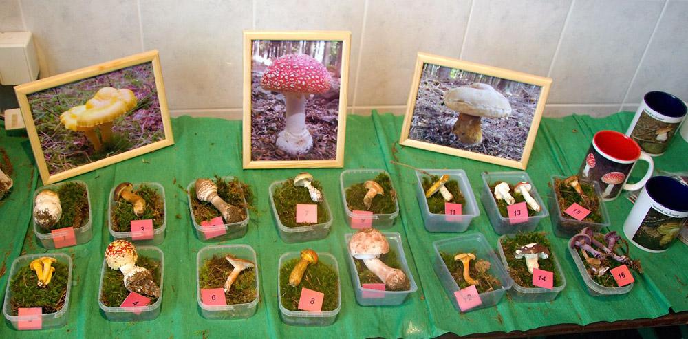 oblíbená disciplína houbařské osvěty - poznávačka hub