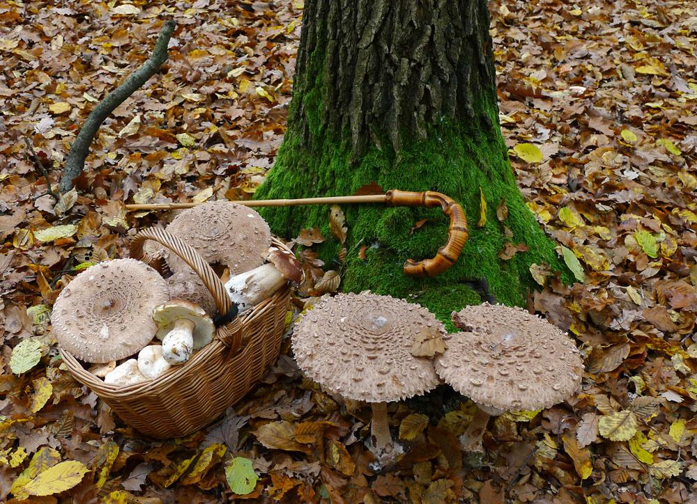 z podzimního houbaření - foto: Aleš Vít
