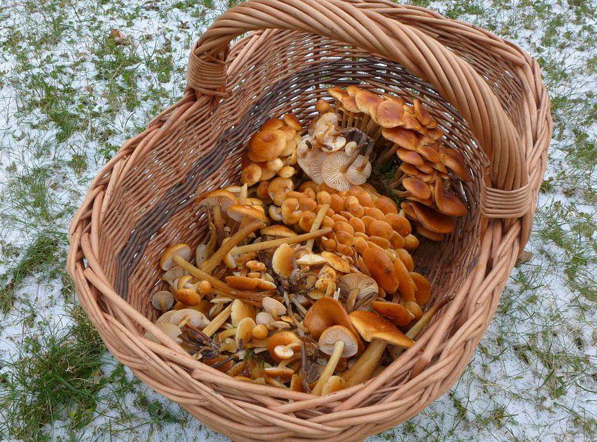 kolovratský zimní houbový koš - foto: Petr Souček