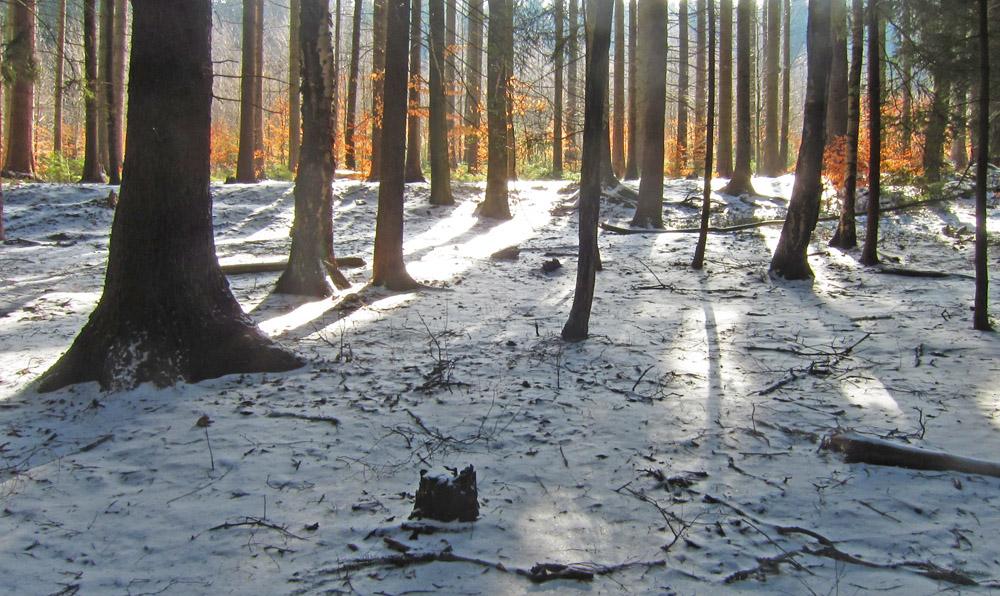 velikonoční jizerskohorské lesní ticho - foto: Petr Hampl