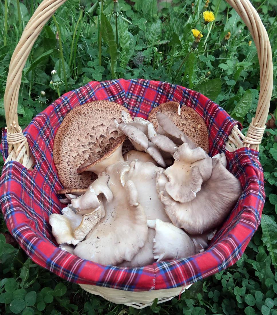 košík dřevních hub - foto: Markéta Vlčková