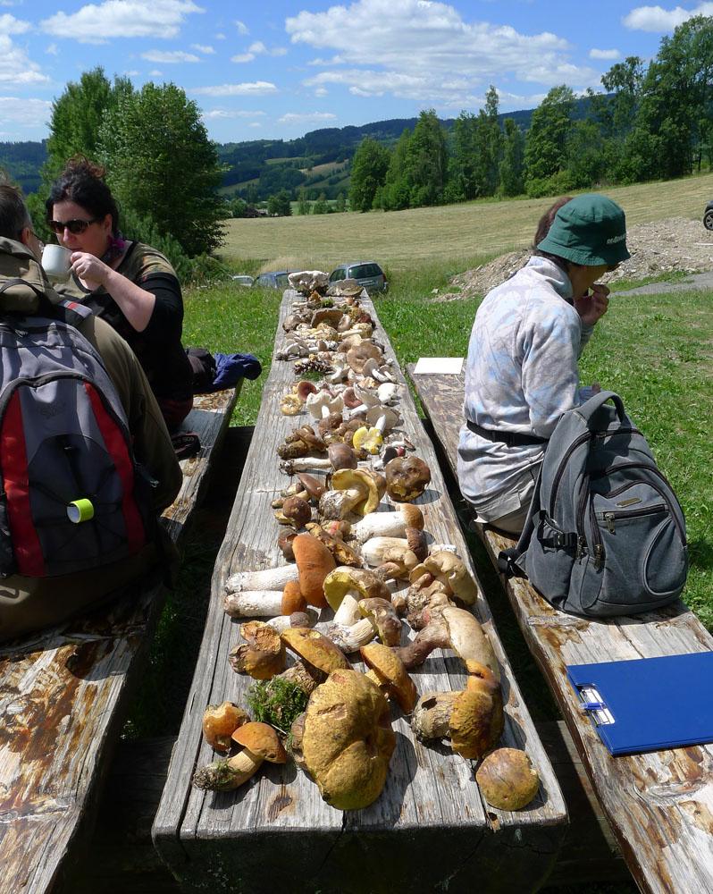 v malebném prostředí jizerskohorských lesů