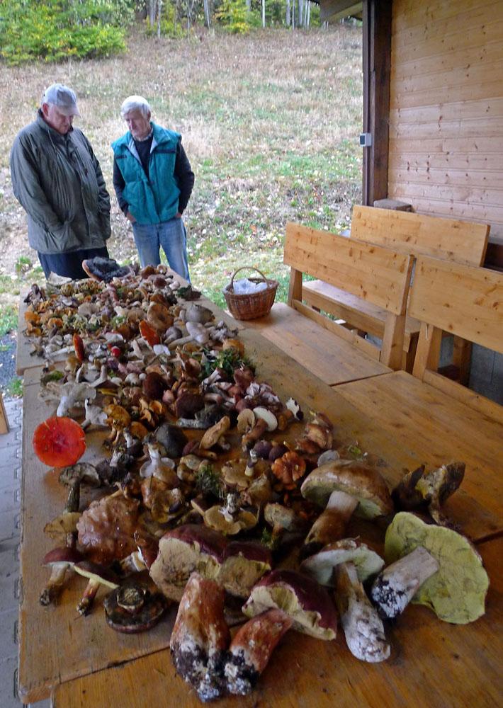 houby stále ještě nějaké rostou