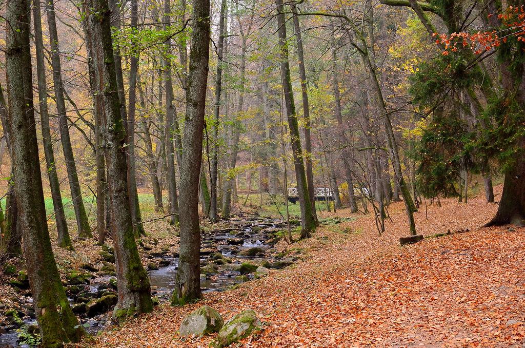 podzimní Terčino údolí - foto: Karolína Turnovcová