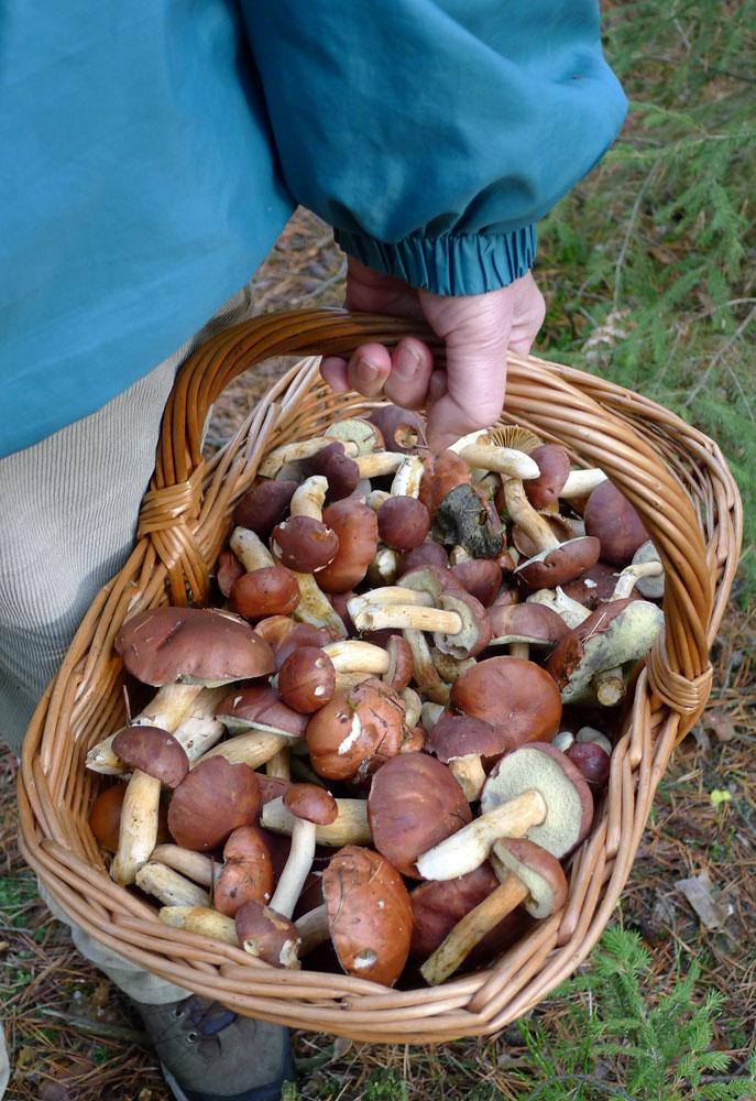z listopadového houbaření - foto: Josef Panský