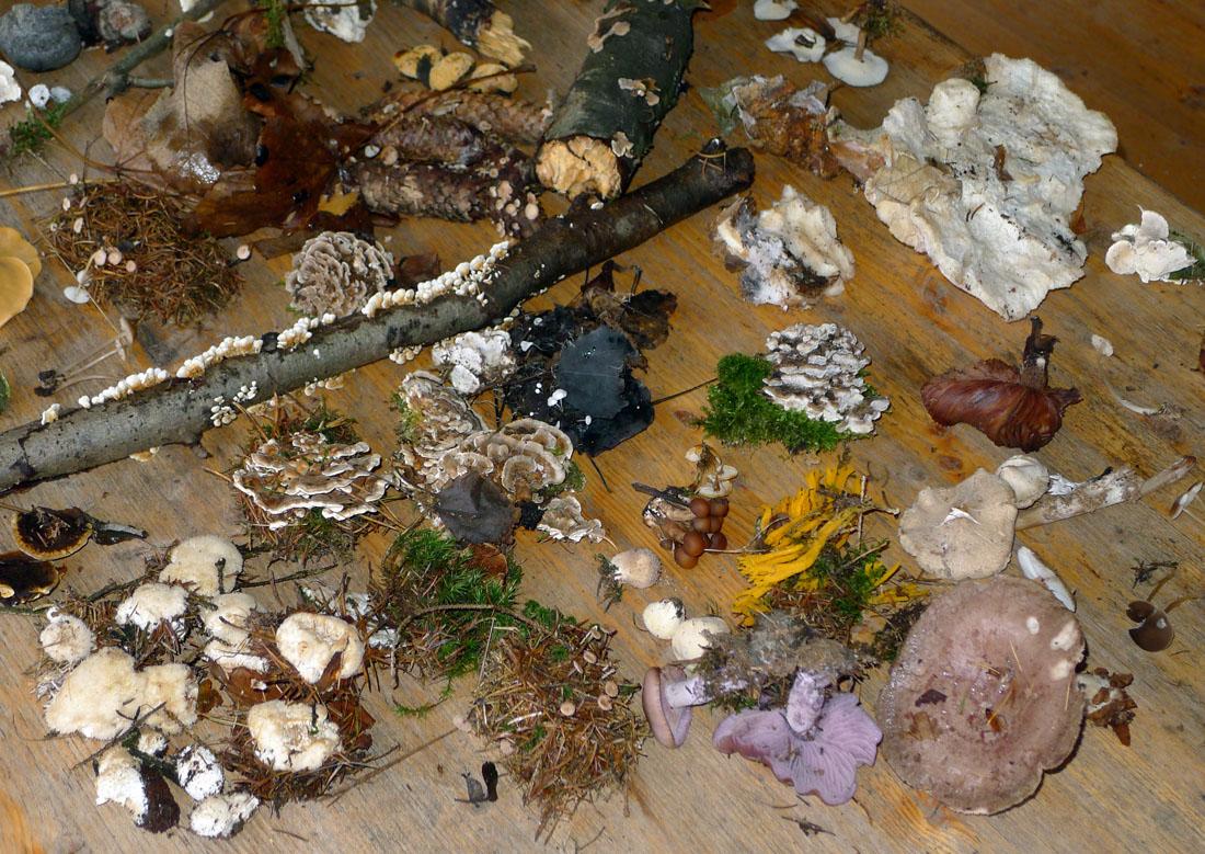 také rozmanité dřevní droboti tu bylo dost