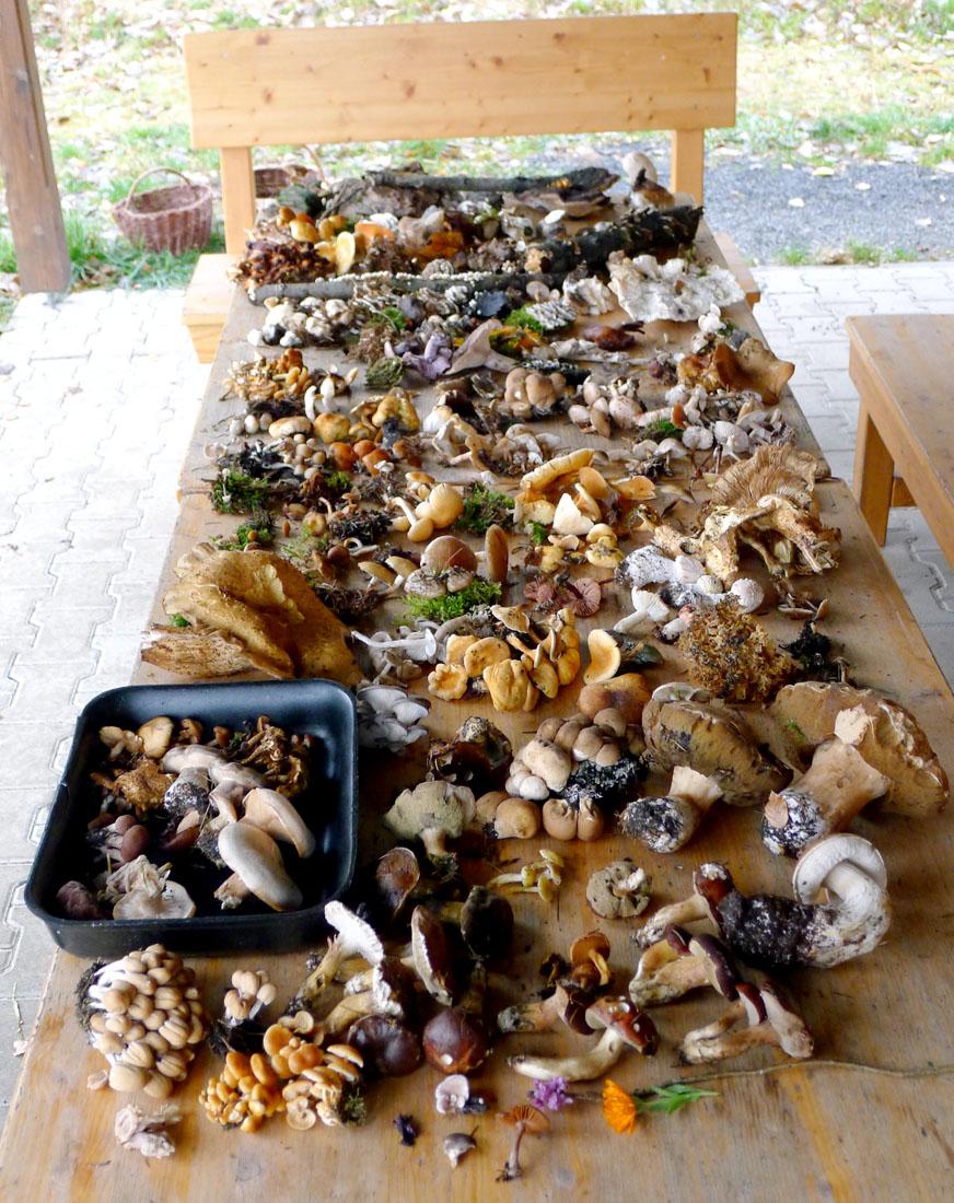 přehled všech nalezených hub