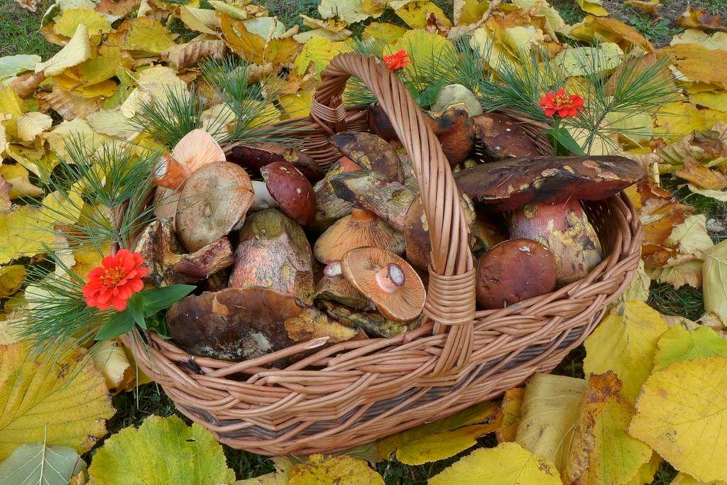 Uhlířskojanovická pozdně podzimní směs - foto: Petr Souček