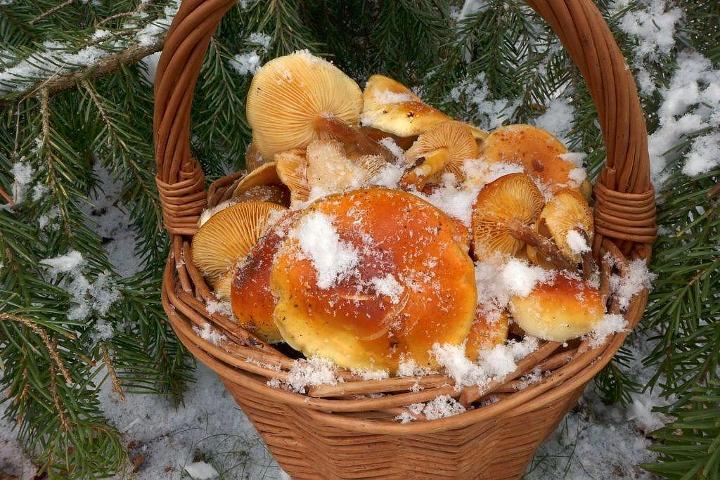 kolovratský zimní sběr - foto: Petr Souček