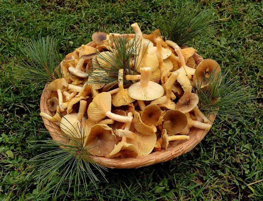 pomrazky pro kuchyni - foto: Květa Součková