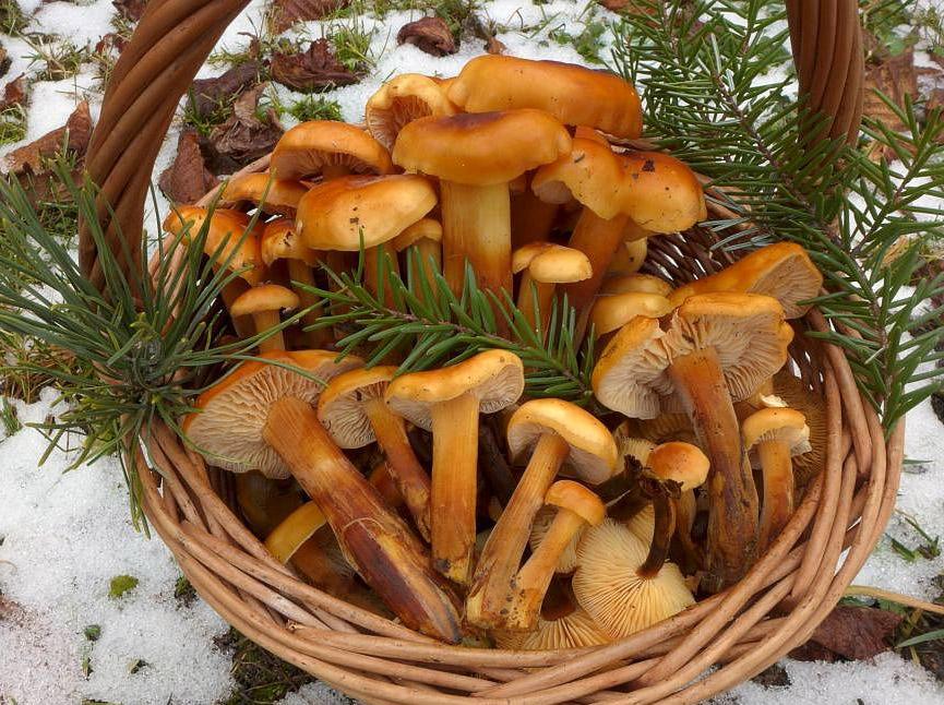 košík pro kuchyni zimních houbařů - foto: Petr Souček