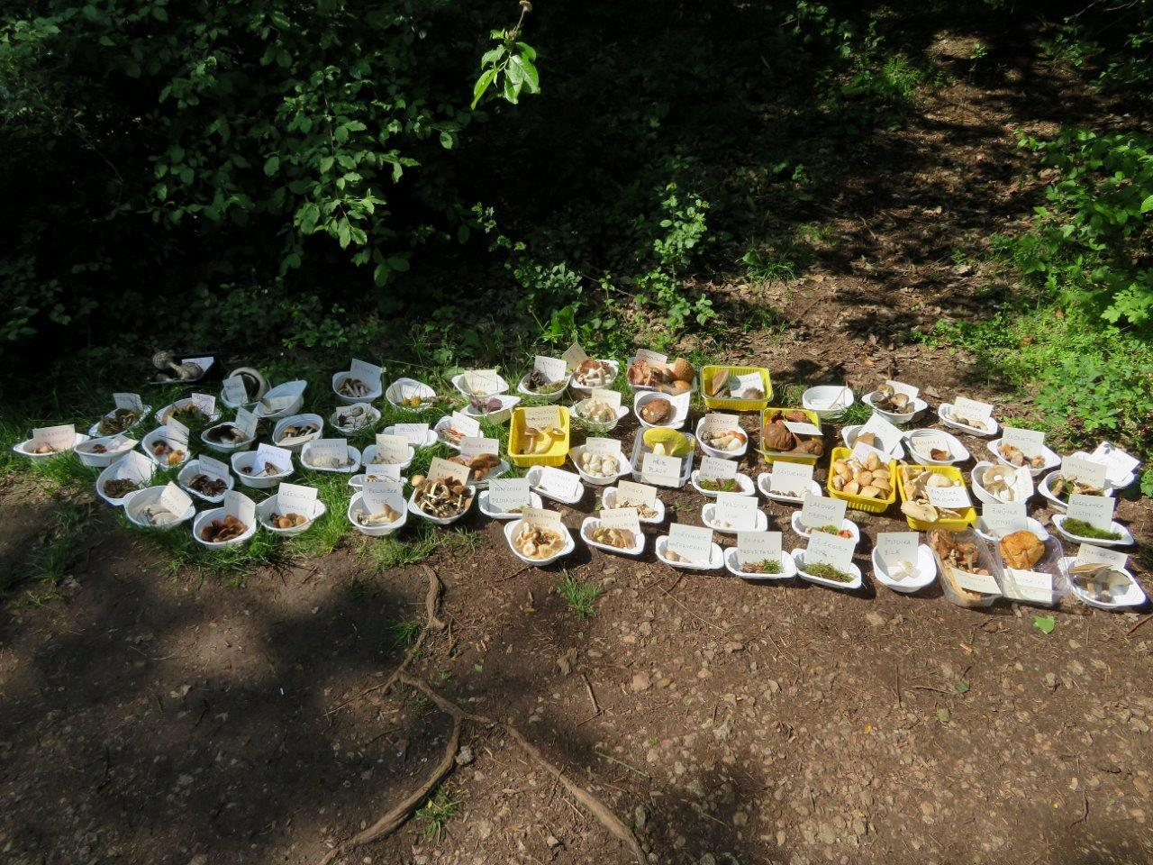 Expozice donesených hub - foto: Lubomír Opat