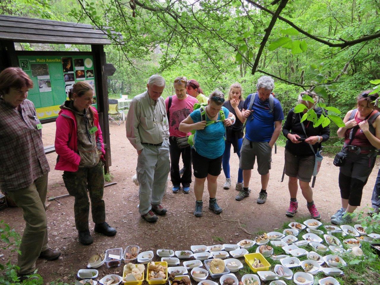 Diskuse nad houbami - foto: Lubomír Opat