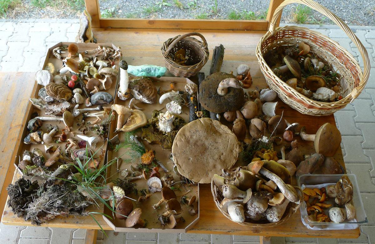 ukázka donesených druhů hub