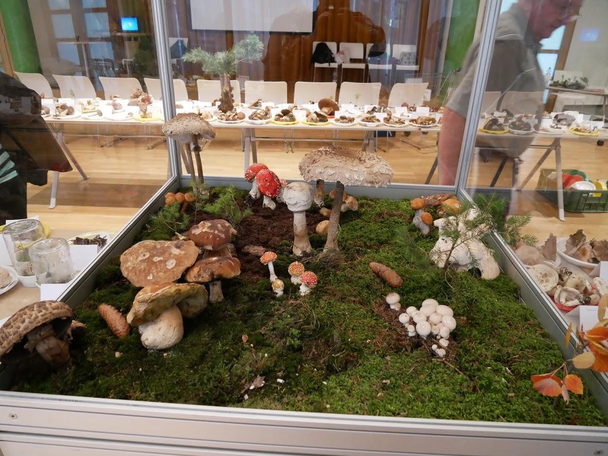 houbový ráj - foto: Bohdan Pardubický