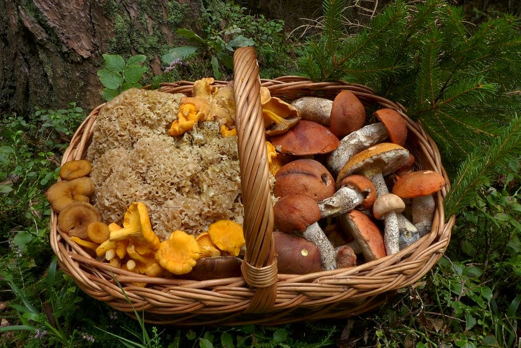 podzimní směs zMladovožicka - foto: Petr Souček
