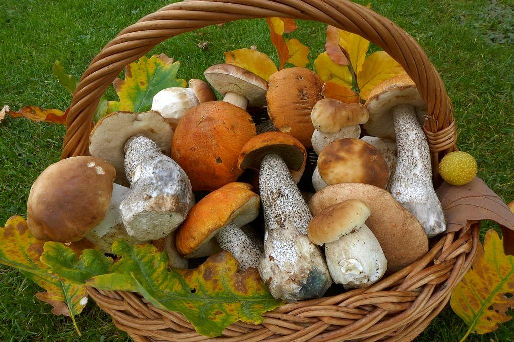 barvy podzimu… - foto: Petr Souček