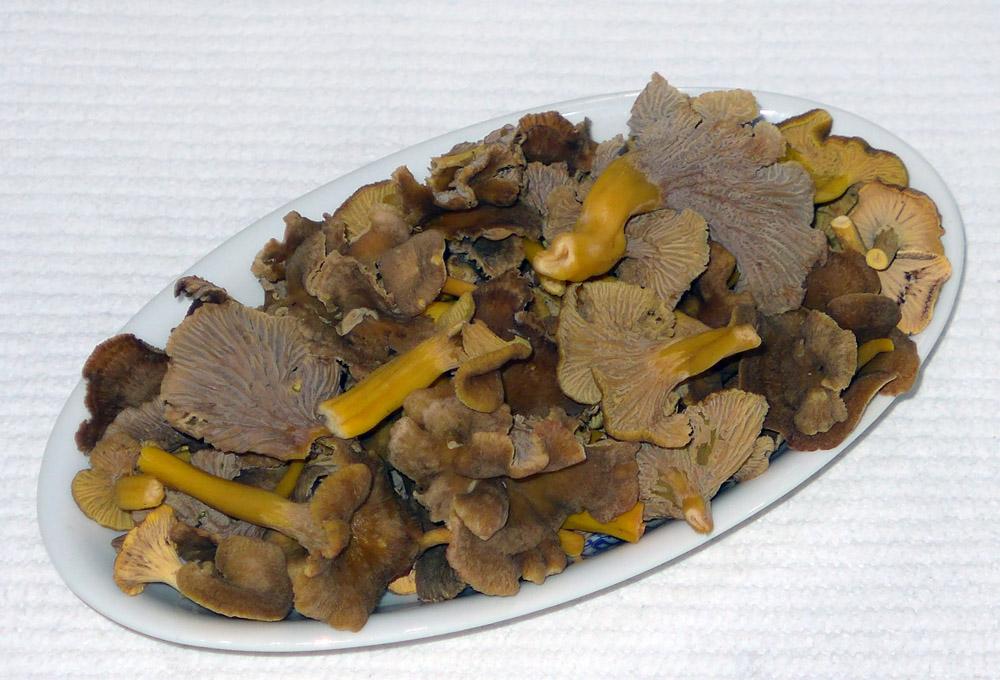 lišky nálevkovité pro kuchyni - foto: Aleš Vít