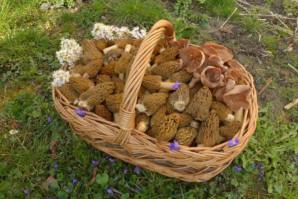 z jarního houbaření - foto: Petr Souček