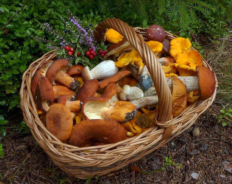 podzimní šumavská směs - foto: Petr Souček