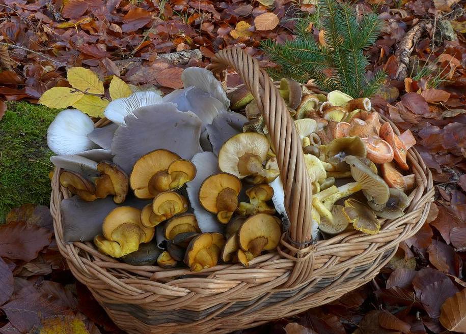 pozdně podzimní houbová směs - foto: Petr Souček