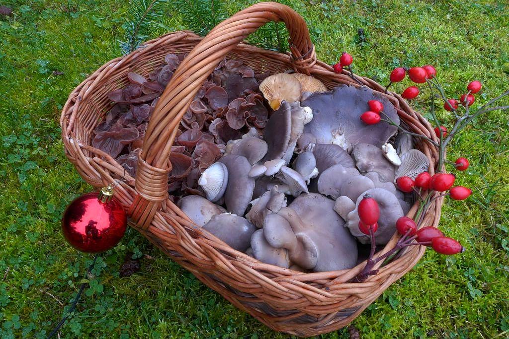 vánoční houbový koš - foto: Petr Souček