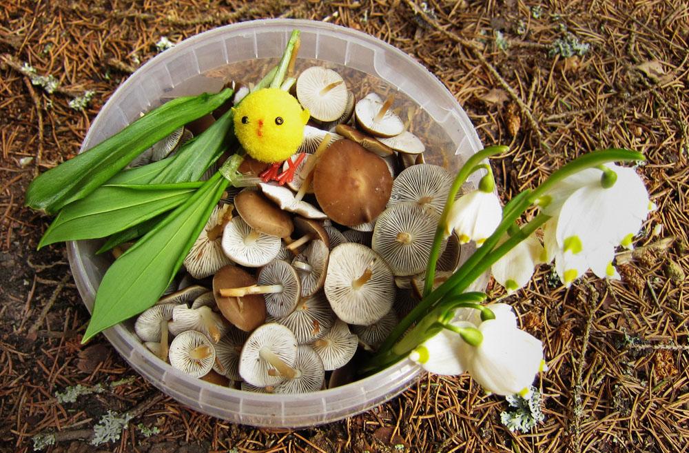 Velikonoční houbařský pozdrav zJizerských hor - foto: Petr Hampl
