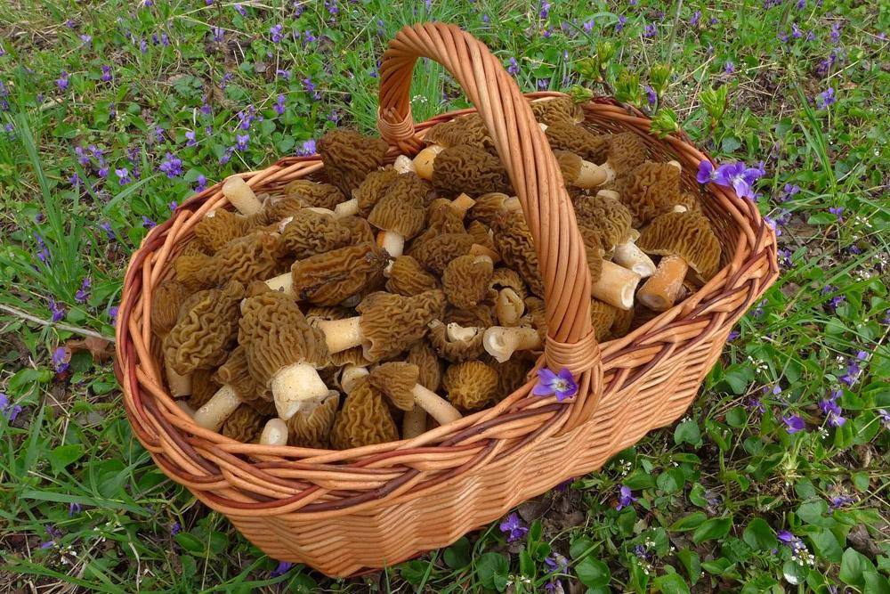 houbařovo jarní potěšení - foto: Petr Souček