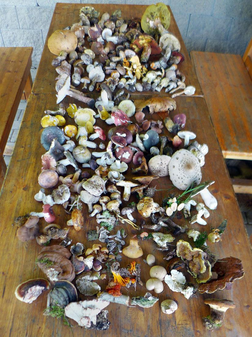 Přehled účastníky přinesených nálezů hub...