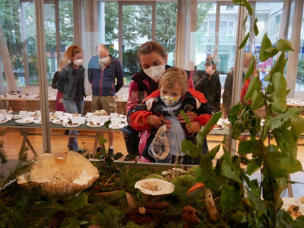 houbová zahrádka - foto: Marek Pardubický